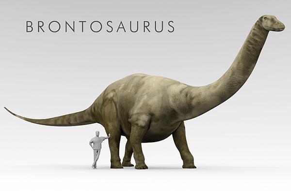 Brontosaurus Ed